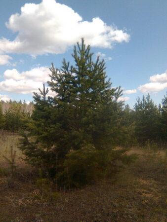 родовое поместье, деревья на поместье